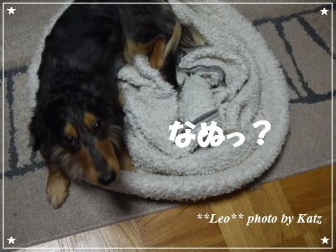 20121130 Leo (2)