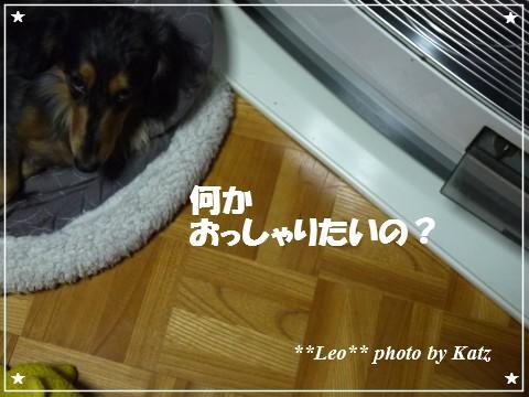 20121120 Leo (2)