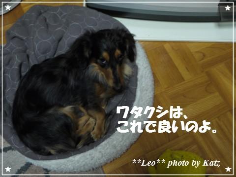 20121120 Leo (4)