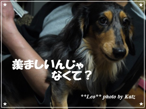 20121206 Leo (3)