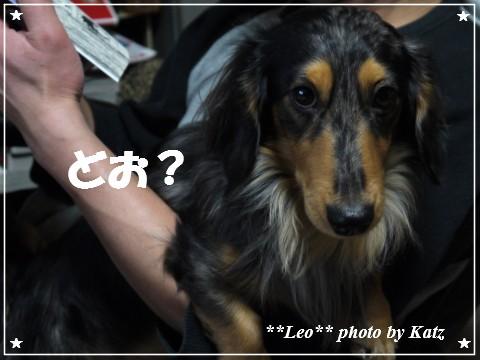 20121206 Leo (4)