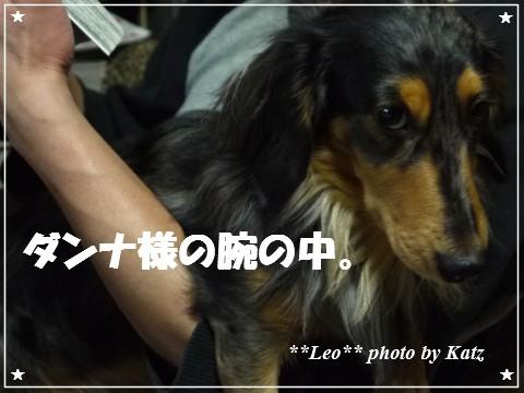 20121206 Leo (5)