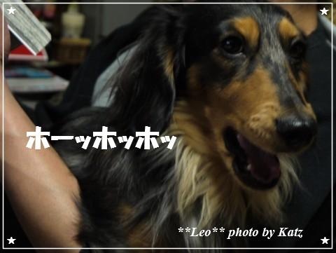 20121206 Leo (6)