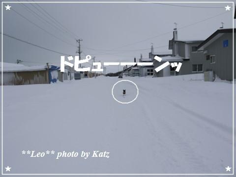 20121209 Leo (4)