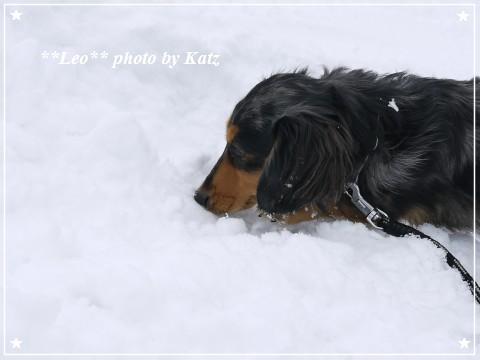 20121209 Leo (5)