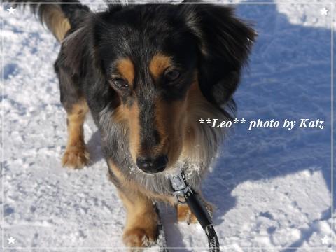 20121224 Leo (5)