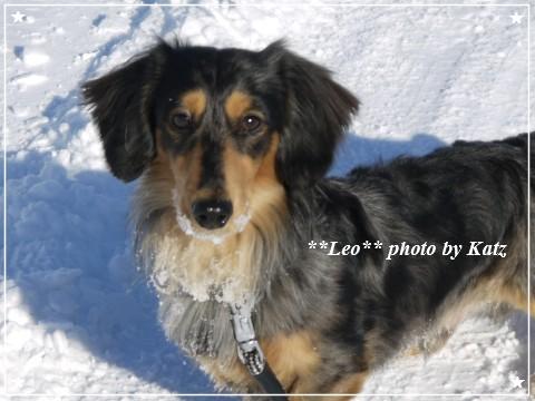 20121224 Leo (7)