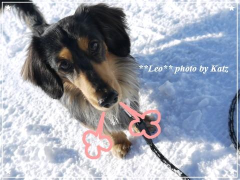 20121229 Leo (13)