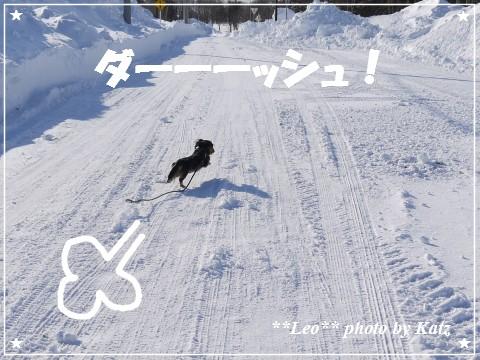 20121229 Leo (4)