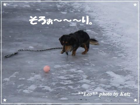 20121230 Leo (4)