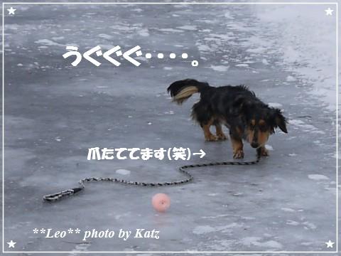 20121230 Leo (5)