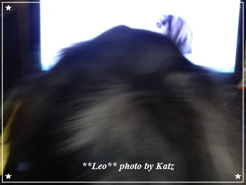 20130106 Leo (2)