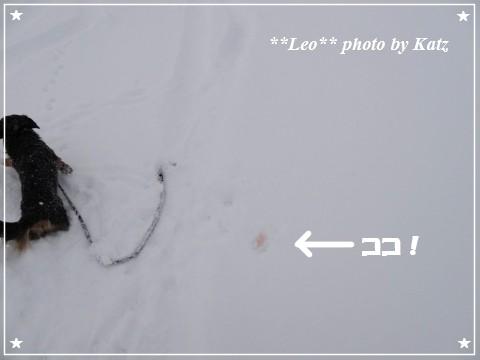20130119 Leo (1)
