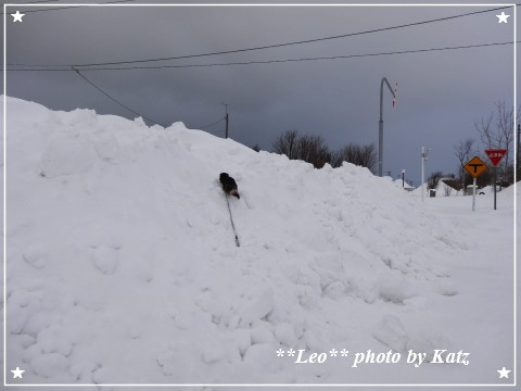 20130119 Leo (3)