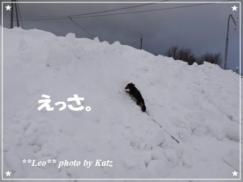 20130119 Leo (5)