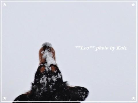 20130119 Leo (7)