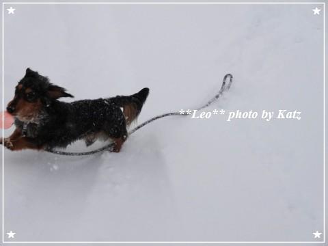 20130119 Leo (11)