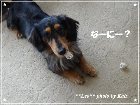 20130119 Leo(2)