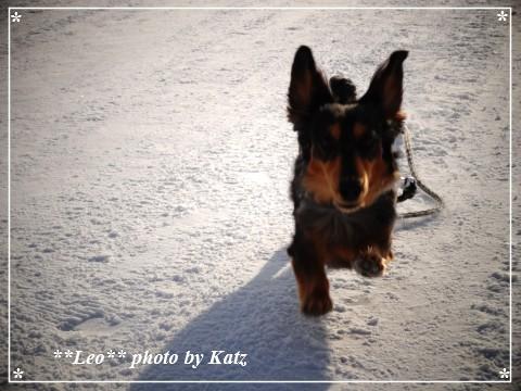 20130211 Leo (10)