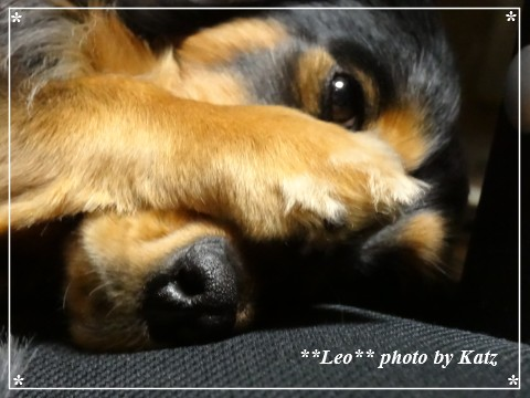 20130215 Leo (4)