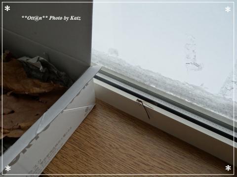 0221 越冬トンボ (1)