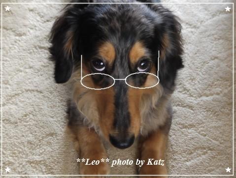 Leo (3)