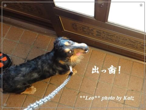 20130216 Leo (8)