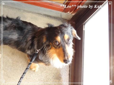 20130217 Leo (1)