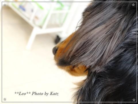20130223 Leo (5)