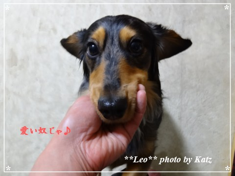 20130309 Leo (5)