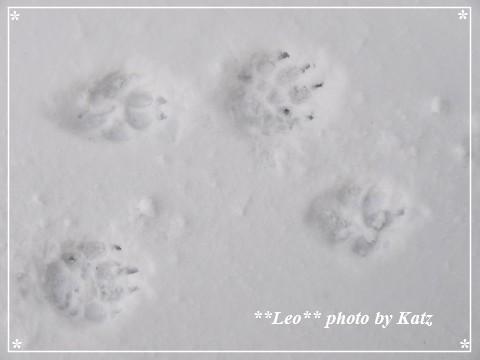 20130309 Leo (10)