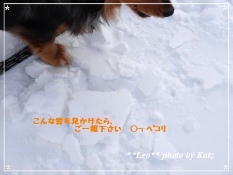 20130309 Leo (12)