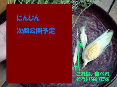 にんじん コーン7.24-2