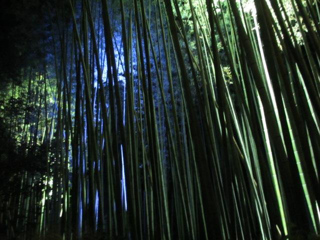 嵐山花灯路2012 竹林の小径2