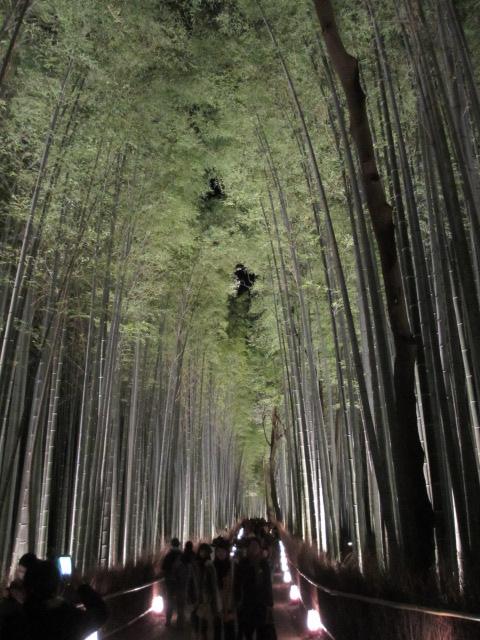 嵐山花灯路2012 竹林の小径9