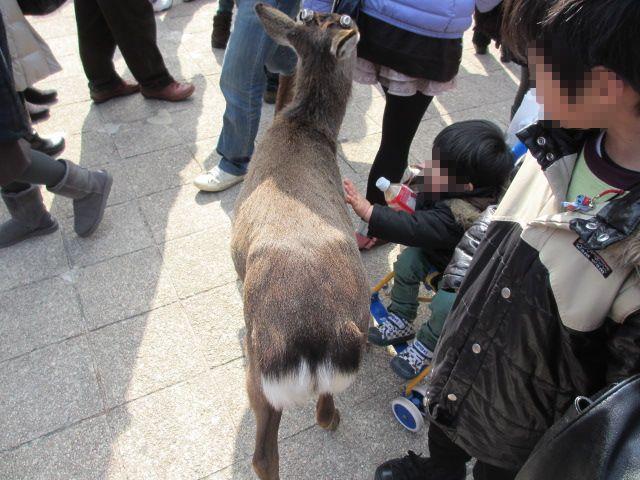 宮島かき祭り26