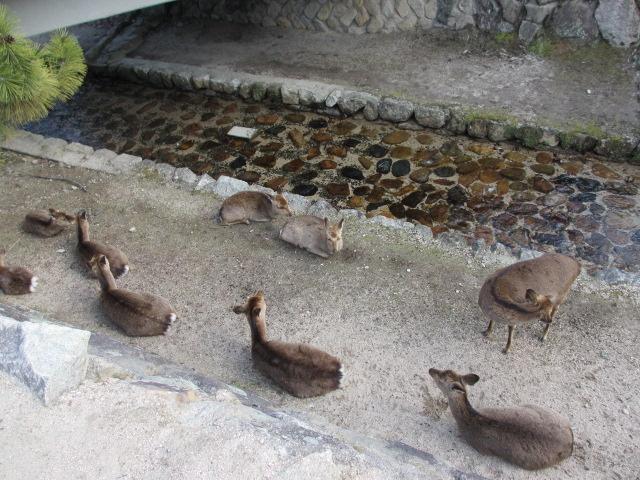 厳島神社 五重塔へ3