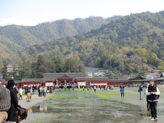 厳島神社 大鳥居7