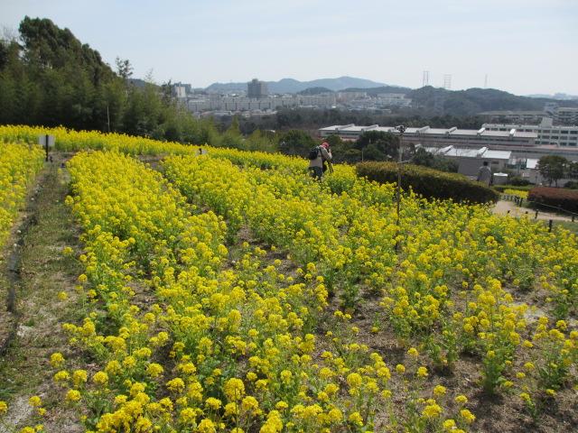 神戸総合運動公園10