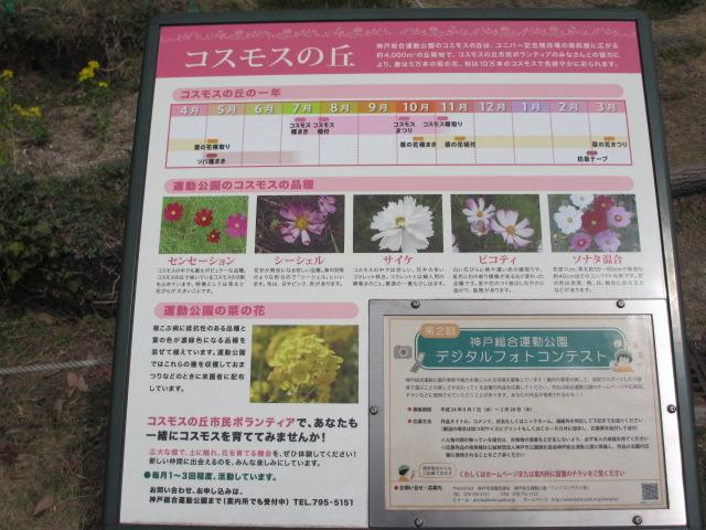 神戸総合運動公園21