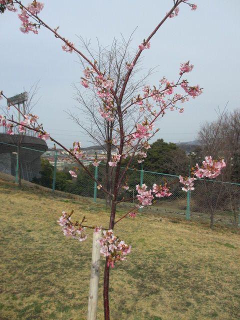神戸総合運動公園37
