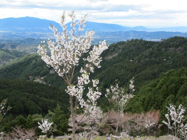 吉野水分神社~義経の隠れ塔13
