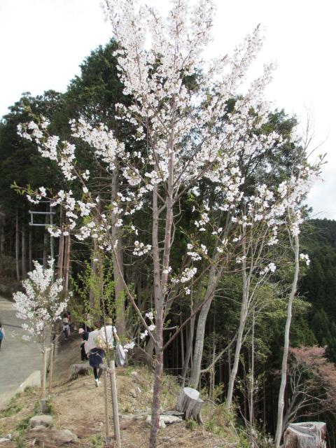 吉野水分神社~義経の隠れ塔15