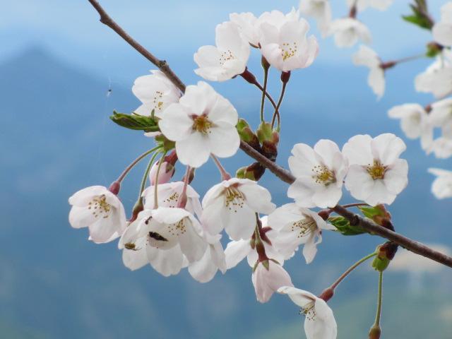 吉野水分神社~義経の隠れ塔(金峯神社)3