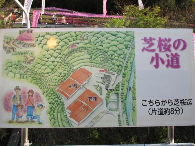 芝桜の小道(昼)3