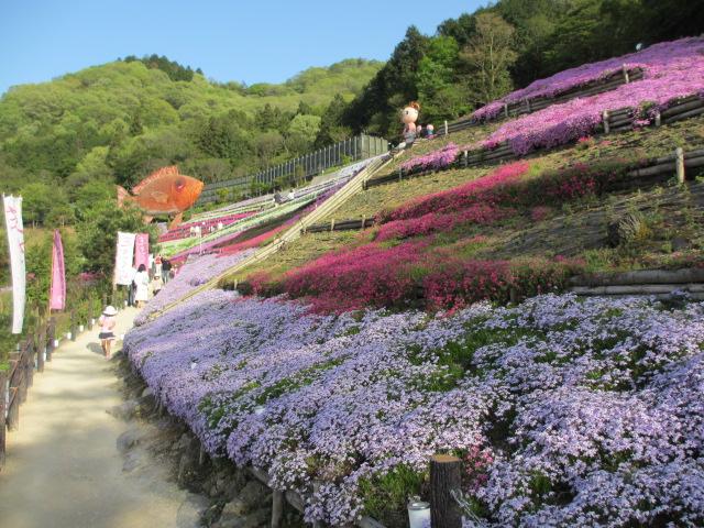 芝桜の小道(昼)6