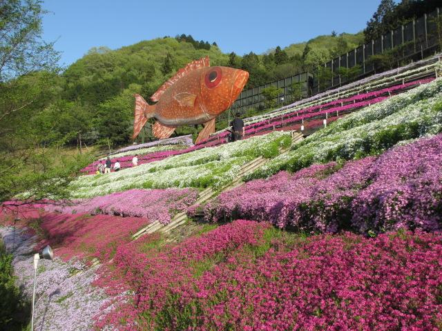 芝桜の小道(昼)10