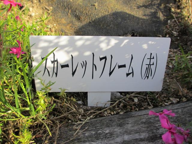 芝桜の小道(昼)12
