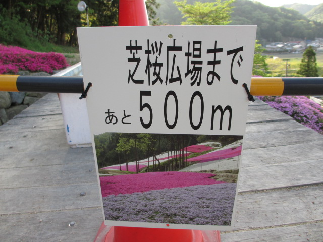芝桜の小道(昼)15