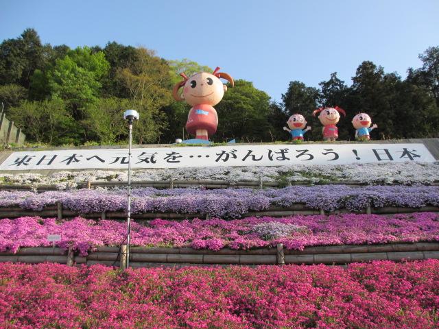 芝桜の小道(昼)16